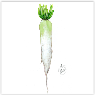 illustration de daikon pour foodchain Thumbnail